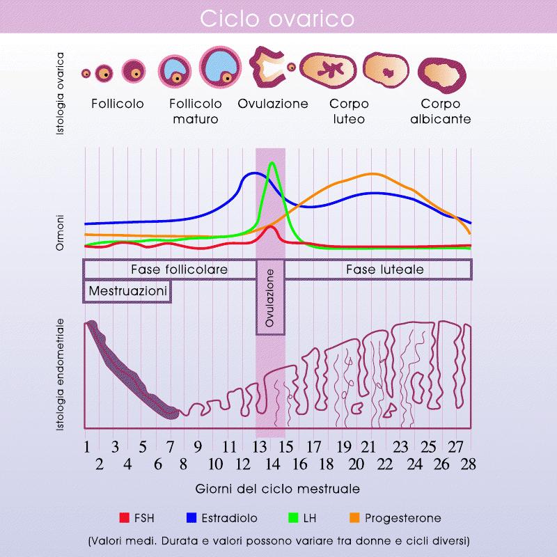 Calendario Ovulazione Giorni Fertili.Periodo Fertile Individuarlo Col Calcolo Dell Ovulazione
