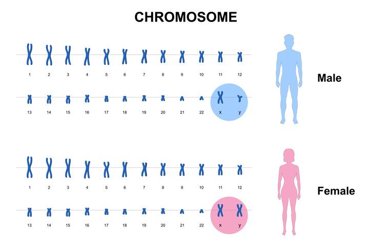 Sindrome dell' X fragile, diagnosi e sintomatologia